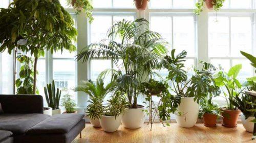 Sobne biljke traže posebnu njegu tokom zime