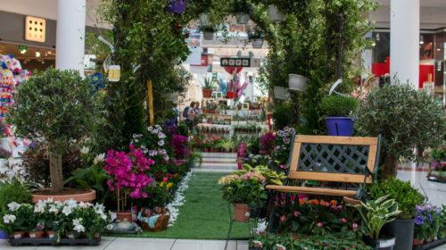 Ovog vikenda VIII Sajam cvijeća i ukrasnog bilja