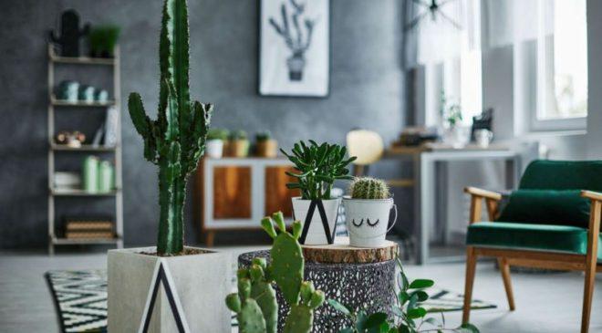 Biljke kao korisne stvari za dnevnu sobu