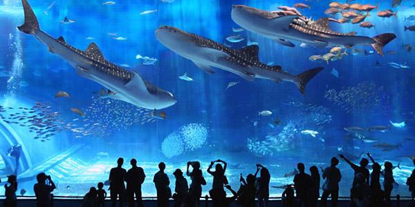 Uskoro će biti otvoren prvi javni akvarijum u Crnoj Gori