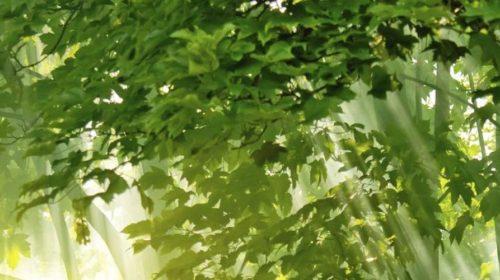 Nekoliko savjeta Singmunda Frojda koji će vam pomoći da živite srećnije