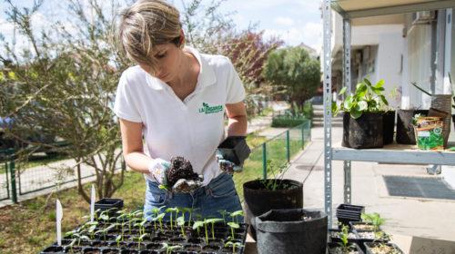 Evo kako da napravite prekrasnu baštu na vašoj terasi