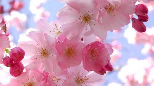 Cvijeće koje obožava hladovinu
