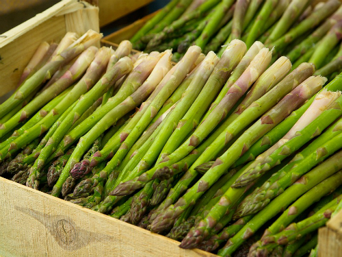 Nutricionista otkriva: NEPRAVEDNO zapostavljeno povrće, koje je DAR OD BOGA za organizam! Starim Grcima je bila lijek!